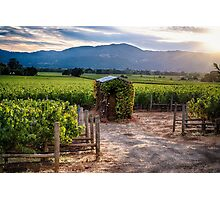 Little Shed in a Vineyard Photographic Print