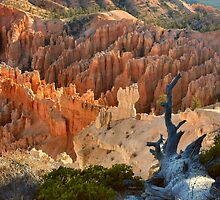 Bryce Canyon Sunrise Colors by Stephen Vecchiotti