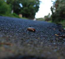 Bug on the road by justbmac