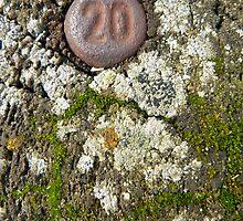 20... by Nuh Sarche