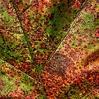 Autumn Leaf Detail by Roger Passman