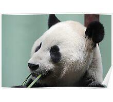 Pandamonium Poster
