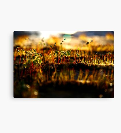 the army of underdogs Canvas Print