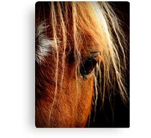 Sunset Horse Canvas Print