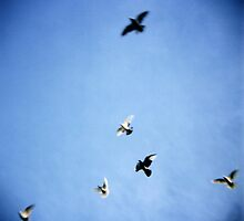 Doves  by Rachel Lilly
