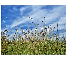 A summer meadow Photographic Print