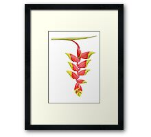 Heliconia Branch Framed Print