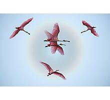 Flights of imagination Photographic Print