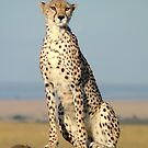 Cheetah- Masai Mara by Gazart