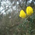 Flower amongst the thorns by Amanda Norris