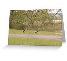 Black Swan Hates Canada Goose Greeting Card