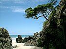 The lonely Pohutukawa tree........ by Roy  Massicks