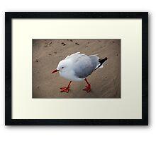 Seagull on the trot Framed Print
