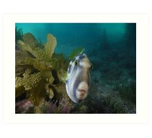 Leatherjacket fish Art Print