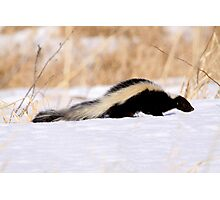 Pepe-Le Pew Photographic Print