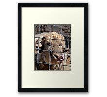 Who Needs Fingers? Framed Print