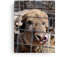 Who Needs Fingers? Canvas Print