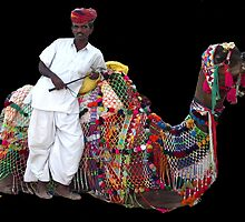 Camel transport, Jodhpur, Rajasthan, India by Bev Pascoe