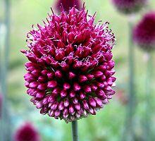 Purple love by WLflowers