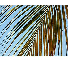 no need for shutters Photographic Print