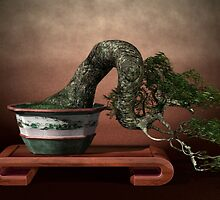 Bonsai Tree - the Dragon in the Wind by nopps