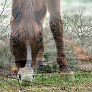 Down on the Farm by Darlene Lankford Honeycutt