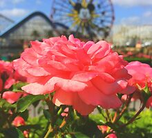 Disney's Paradise Pier #5 by disneylandaily