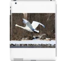 Trumpeter Swan in flight iPad Case/Skin