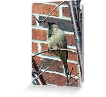 SPRING IS HERE !!! Greeting Card
