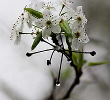 Bloom by Bonnie Blanton