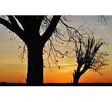 Sunset Pecan Trees Photographic Print