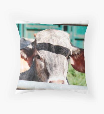 Bull Calf Throw Pillow