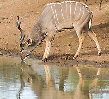 Kudu Bull by Vickie Burt