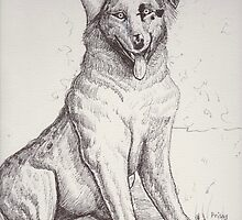 Australian Shepherd Dog by dorcas13