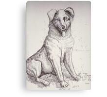 Australian Shepherd Dog Canvas Print