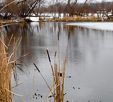 Big Waverly Lake Cattails  by Robert Meyers-Lussier