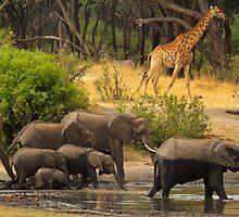 Noah's ark by Explorations Africa Dan MacKenzie