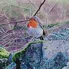Robin on a Rock by Karen  Hull