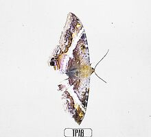 "Kendrick Lamar Graphic ""TO PIMP A BUTTERFLY"" by David Spector"