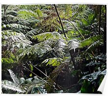 Tropical Fern Forest 03 Poster