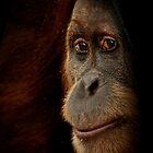 Primates by Natalie Manuel