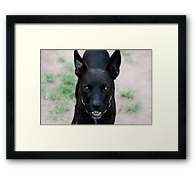 Sam's eyes Framed Print