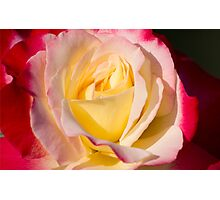 Yellow and Red Rose  Photographic Print
