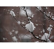 Snow on a branch Photographic Print