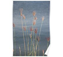 Grass blowing in the wind Poster