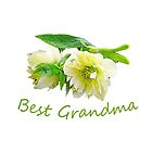 Lovely white peony flowers best grandma  photo art. floral garden nature photography. by naturematters