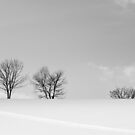 Tracks To The Trees In Snow by Heath Carney