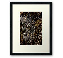 Rustic Web Framed Print