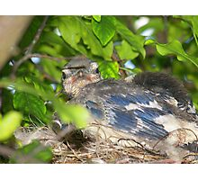 Baby Bird Photographic Print