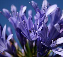 Purple by Noha